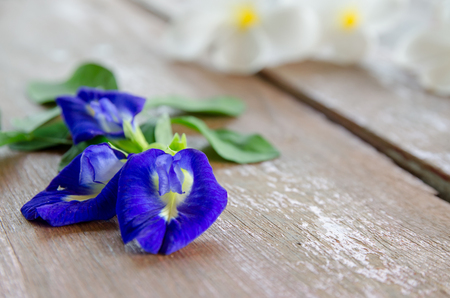 tabel: Butterfly Pea flower and leaf on wood tabel.