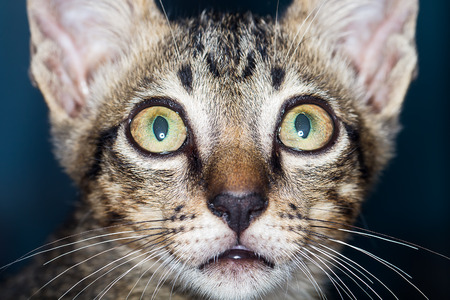 paw smart: Cats are curious sight Stock Photo