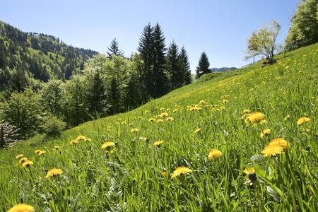 beautiful yellow flowers on a green field