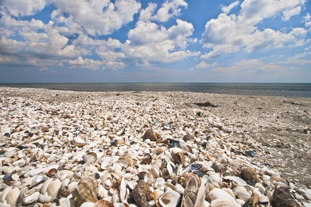 a beach full of shells and a blue sky
