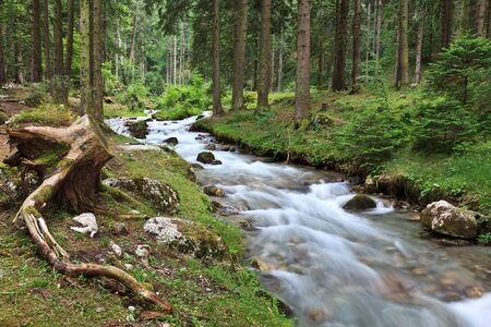 fiume di montagna in una foresta di alberi