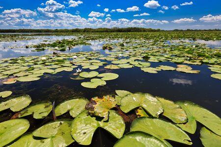 danube delta: a beautiful lake in Danube Delta, Romania Stock Photo