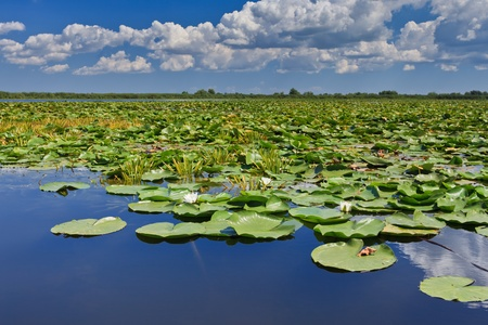 a beautiful lake in Danube Delta, Romania Stock Photo