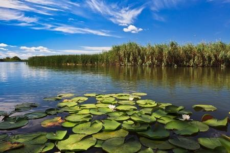 un hermoso lago en el Delta del Danubio, Romani Foto de archivo