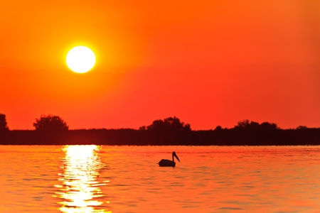 a beautiful sunrise in the Danube Delta, Romania photo