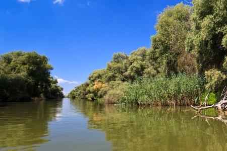un canale piccolo fiume nel Delta del Danubio Archivio Fotografico