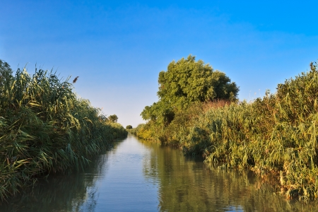 danubian: a river channel in Danube Delta, Romania
