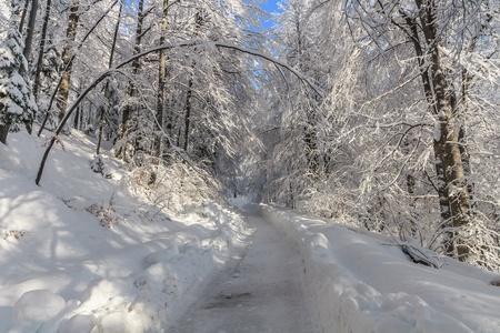 a rustic road through the woods in winter photo