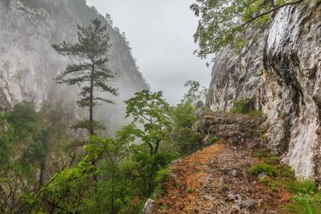 baile: Tasnei Gorge protected area in Baile Herculane, Romania.