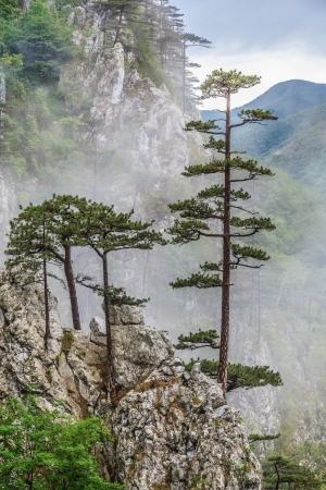 Tasnei Gorge area protetta in Baile Herculane, Romania.