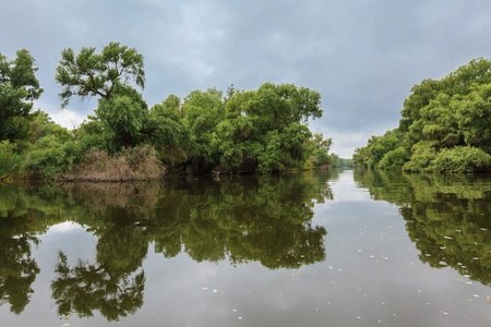 danube delta: Water channel in the Danube Delta with swamp vegetation and flooded forest