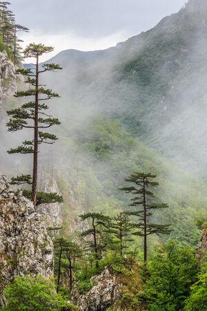 baile: Tasnei Gorge protected area in Baile Herculane. Mehedinti Mountains, Romania.