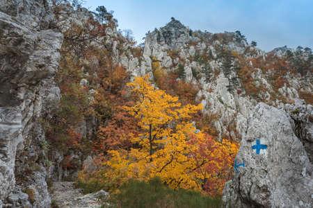 baile: The Tasnei Gorge protected area in Baile Herculane, Romania