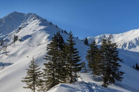 fagaras: pino in pieno inverno. Monti Fagaras, Romania Archivio Fotografico