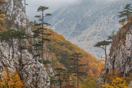 baile: Tasnei Gorge protected area in Baile Herculane, Romania
