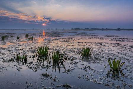 danube delta: a beautiful sunrise in the Danube Delta, Romania