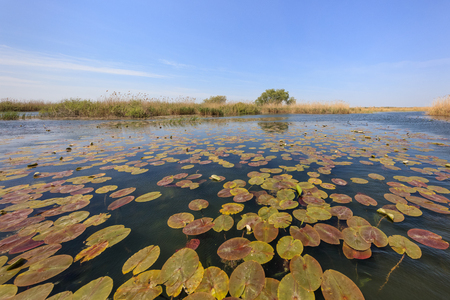 landscape in the Danube Delta, Romania, Europe