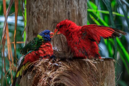 colorful parrots in Loro Park in Tenerife Canary islands. Spain