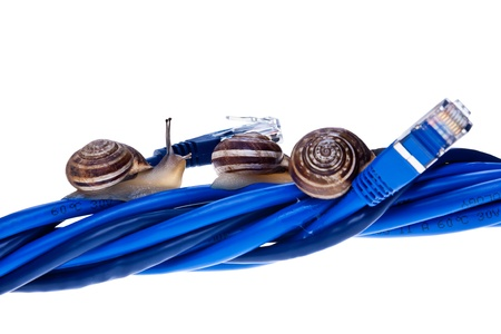 Snails moving on twisted lan cables photo