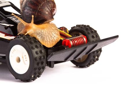 rc: Snail on an RC Toy Race Car