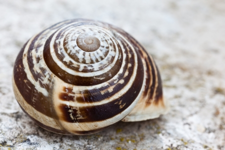 A macro shot of a snail shell  Extremely detailed photo