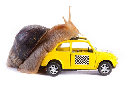 Snail on a toy car photo