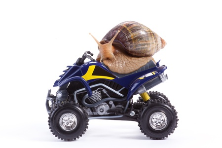 A snail looking at the camera riding a toy quad model photo