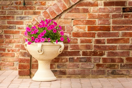 close up shot of some beautiful petunia flowers over a brown brick wall photo