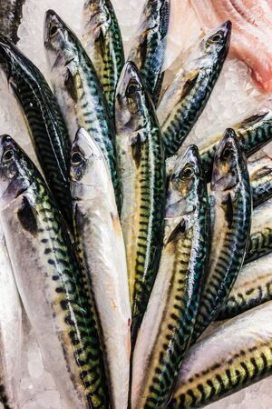 a lot of mackerel fishes arrangen on the ice in a market photo