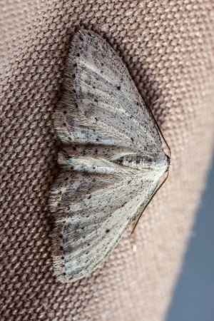 extreme macro shot of a small moth sitting on fabric Stock Photo - 20553977