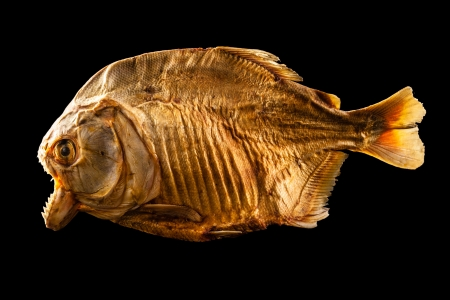 pirana: isolated shot of a dried and scary piranha