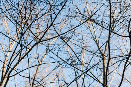some bare tree branches over a pastel blue sky photo