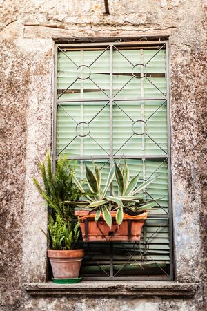 a windows of an old italian building with two potted plants Stock Photo - 20564393