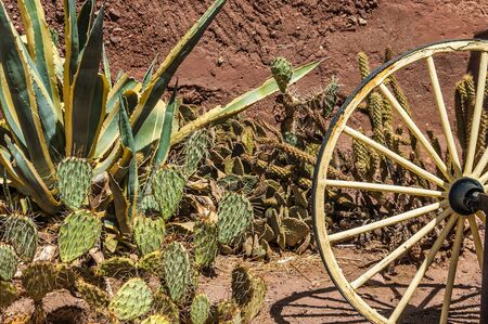 a wagon wheel and a lot of cactus in Calico ghost town, California photo