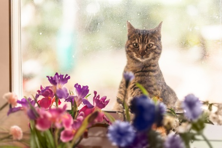 an adorable cat looking inside from a dirty window Stock Photo - 20564067