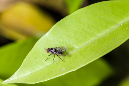 ugliness: macro shot of a common house fly crawling over a green leaf Stock Photo