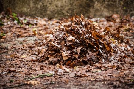 hojas secas: un mont�n de hojas muertas y secas en la maleza Foto de archivo