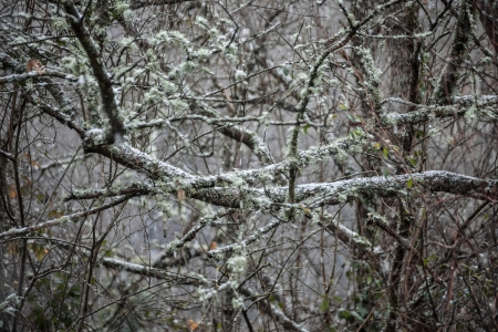 tree branches covered with lichens and moss photo