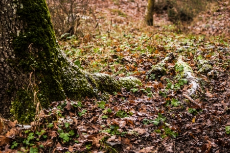 undergrowth: a lot of dead, dry leaves in the undergrowth Stock Photo