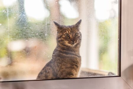 an adorable cat looking inside from a dirty window Stock Photo - 20564068