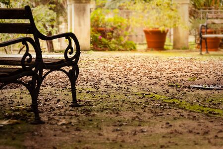 a bench in a park with the ground covered by acorns photo