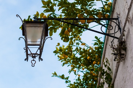 an old and pictoresque street lantern over some branches of lemons Stock Photo - 20685207