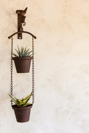 two nice and tiny succulent potted plants hanged on a wall Stock Photo - 20706153