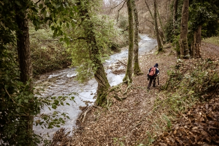 ravine: a hiker walking on the side of a small river in a forest Stock Photo