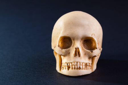 a tiny and dirty skull model made of stone Stock Photo - 23394035