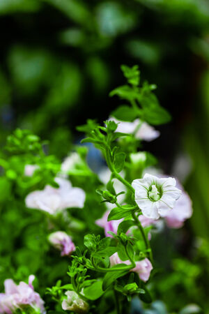 tiny flowers growing in a garden with lush foliage Stock Photo - 23394036