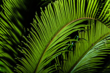 detail of a green chicas palm tree over black Stock Photo - 23394056