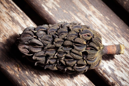 a magnolia pinecone on a wooden surface in the garden Stock Photo - 23394062