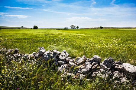 pastureland: a beautiful rural landscape with some rocks. South of Italy, Apulia