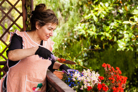 a cheerful old lady gardening in her terrace photo